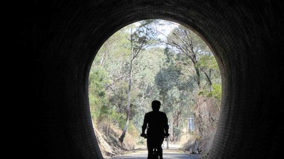 cheviot tunnel web