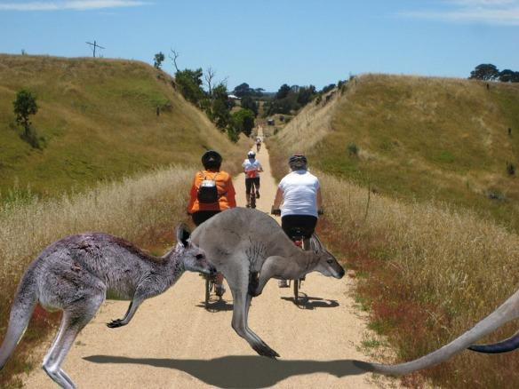 Skipton 17 with kangaroos