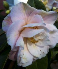 170820 Garden Delights Joy Rosemary_13