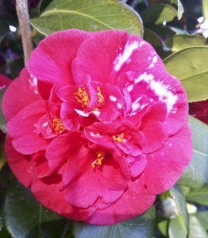 170820 Garden Delights Joy Rosemary_16