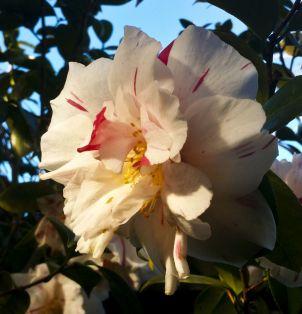 170820 Garden Delights Joy Rosemary_21