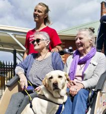 Guide dogs can also enjoy the ride